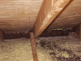 D & T Pest and Termite Control, Inc. image 0
