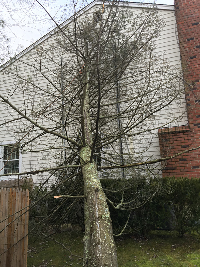 Kev's Landscaping & Tree Service image 11