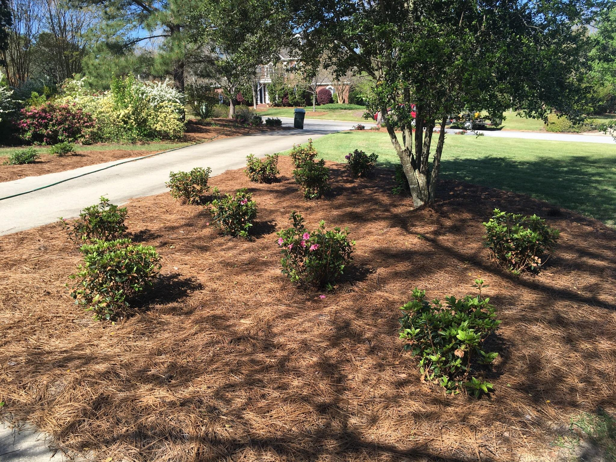 One 12 Landscaping image 6
