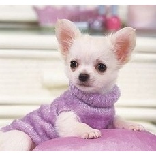 Affordable Pet Boarding Inn - Dog Boarding Kennel alternative No Cages - ad image