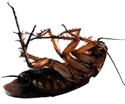 Keen's Pest Control Services image 0