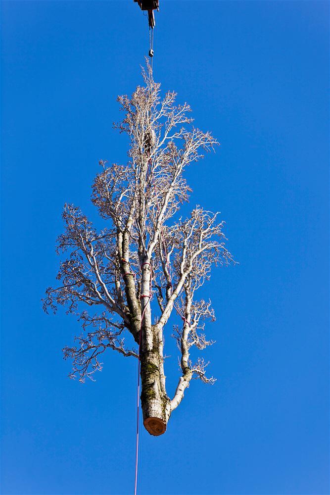 S & L Tree Service & Stump Grinding image 2