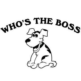 Who's the Boss Dog Training