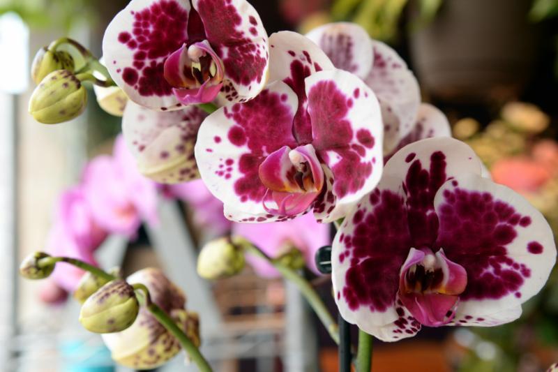 Sophie Dorval Atelier Floral à Montréal