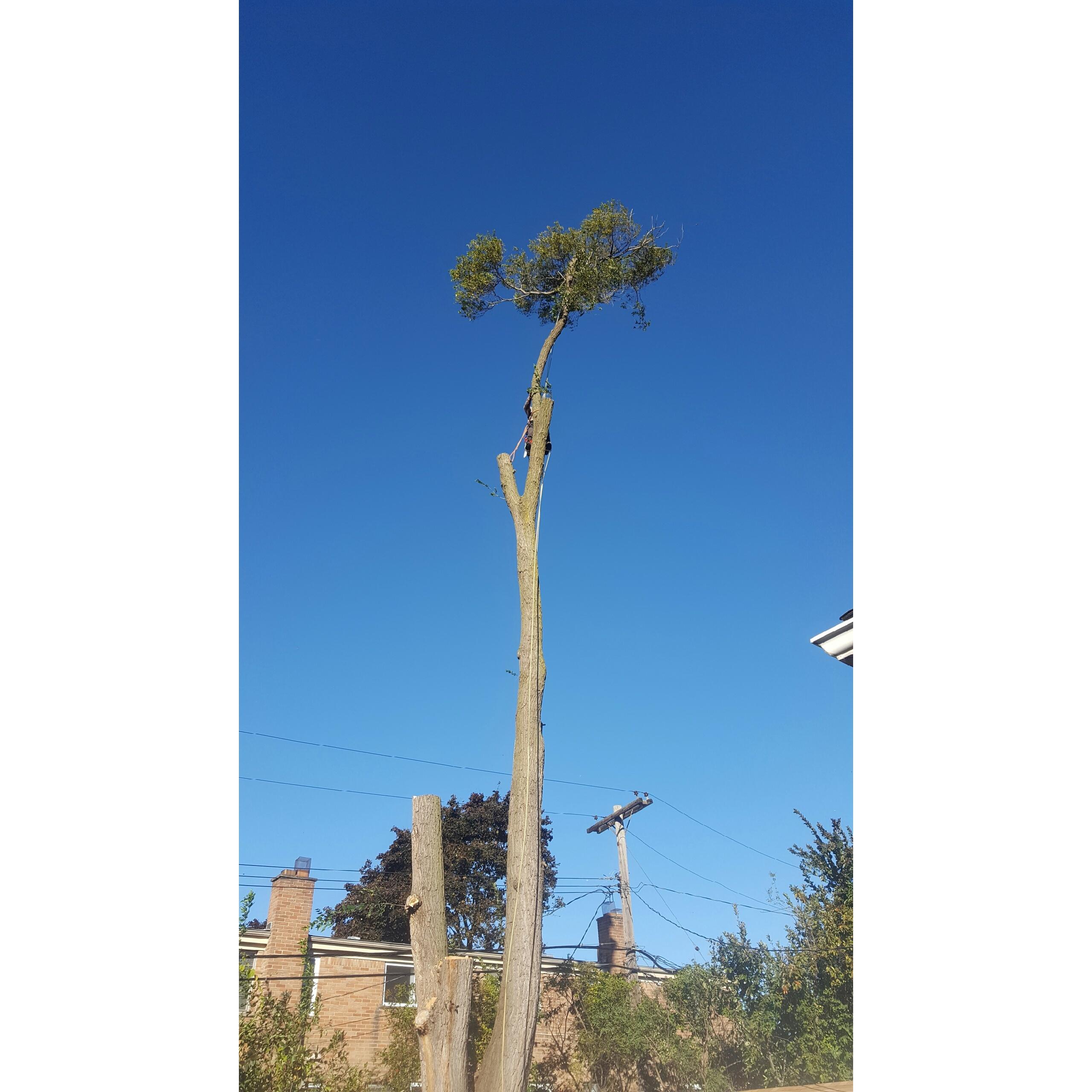 Coffman's Tree Service image 43