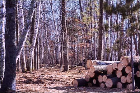 Jn Tree Service image 0