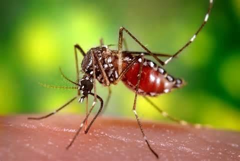 Universal Pest & Termite image 4