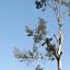 A New Sunrise Tree & Lawn Service image 0
