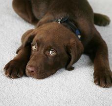 Duggins Carpet Care image 0