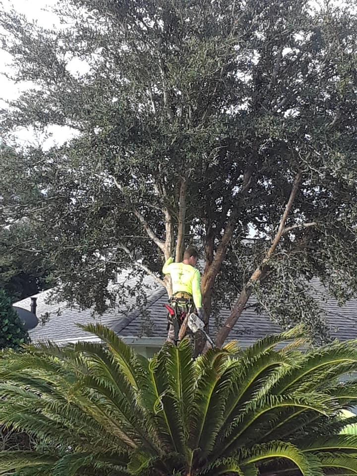 Climbin For Christ Tree Services and Bee Removal image 1