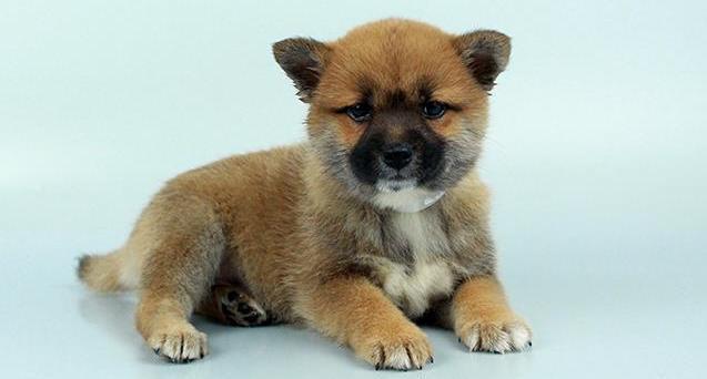 Chews A Puppy image 2
