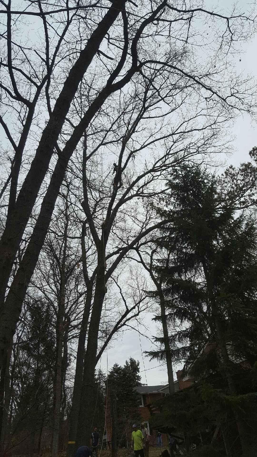 Coffman's Tree Service image 10
