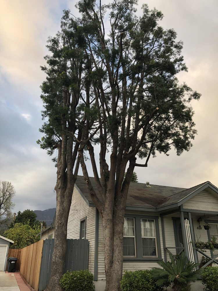 Golden State Tree Service image 3