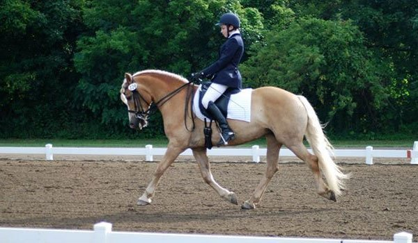 Whisper Wind Equestrian Center Inc image 8
