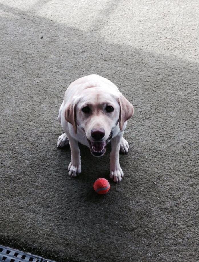 Doggie Daycare & Motel image 7