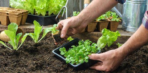 Affordable Landscape Supplies