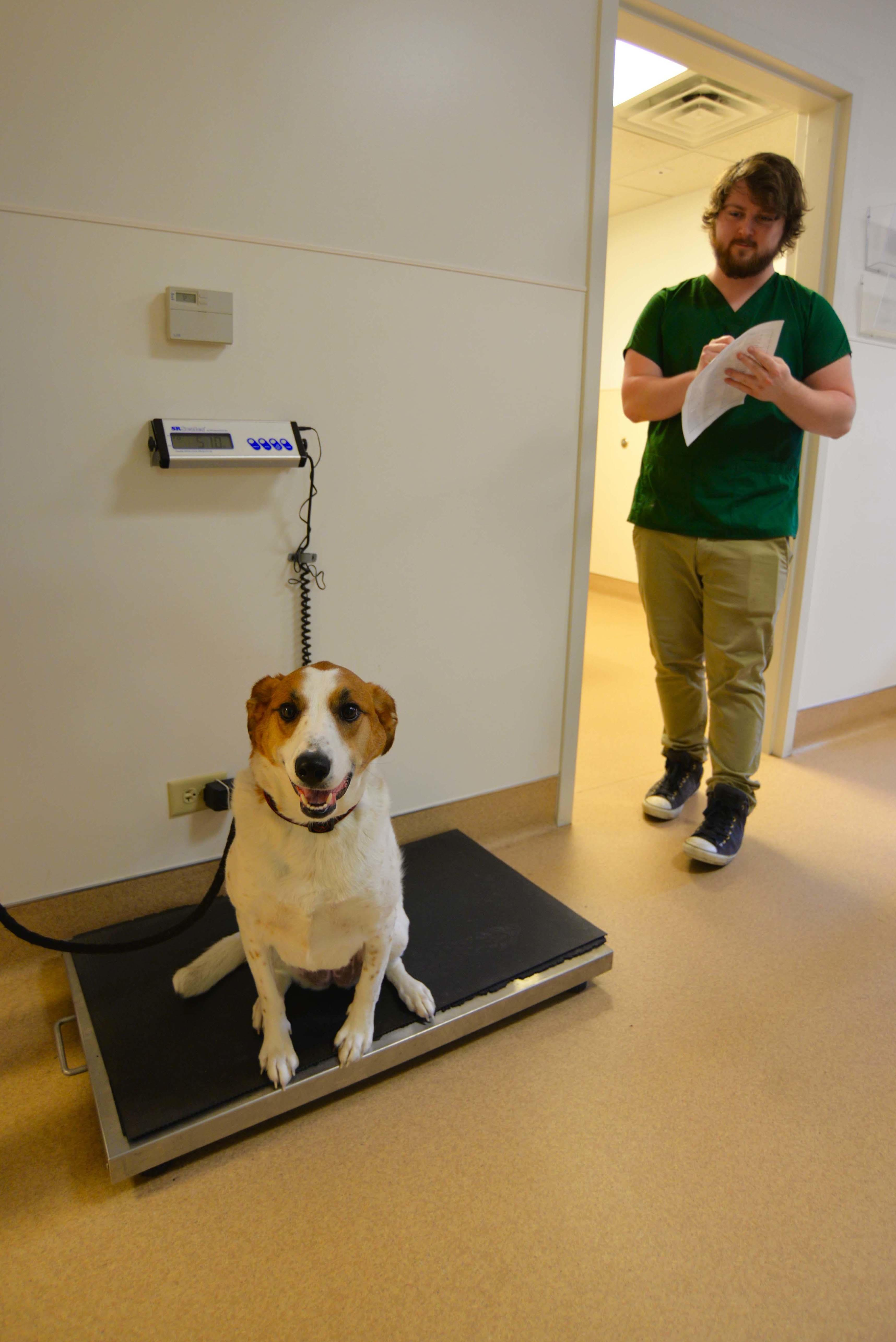 Archer Veterinary Clinic image 21