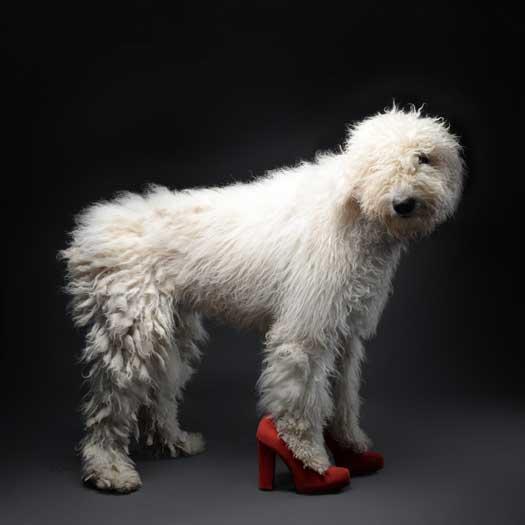 Dog Gone Sensational image 6