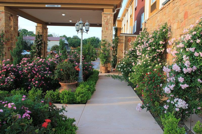 Best Western Plus Blanco Luxury Inn & Suites image 34