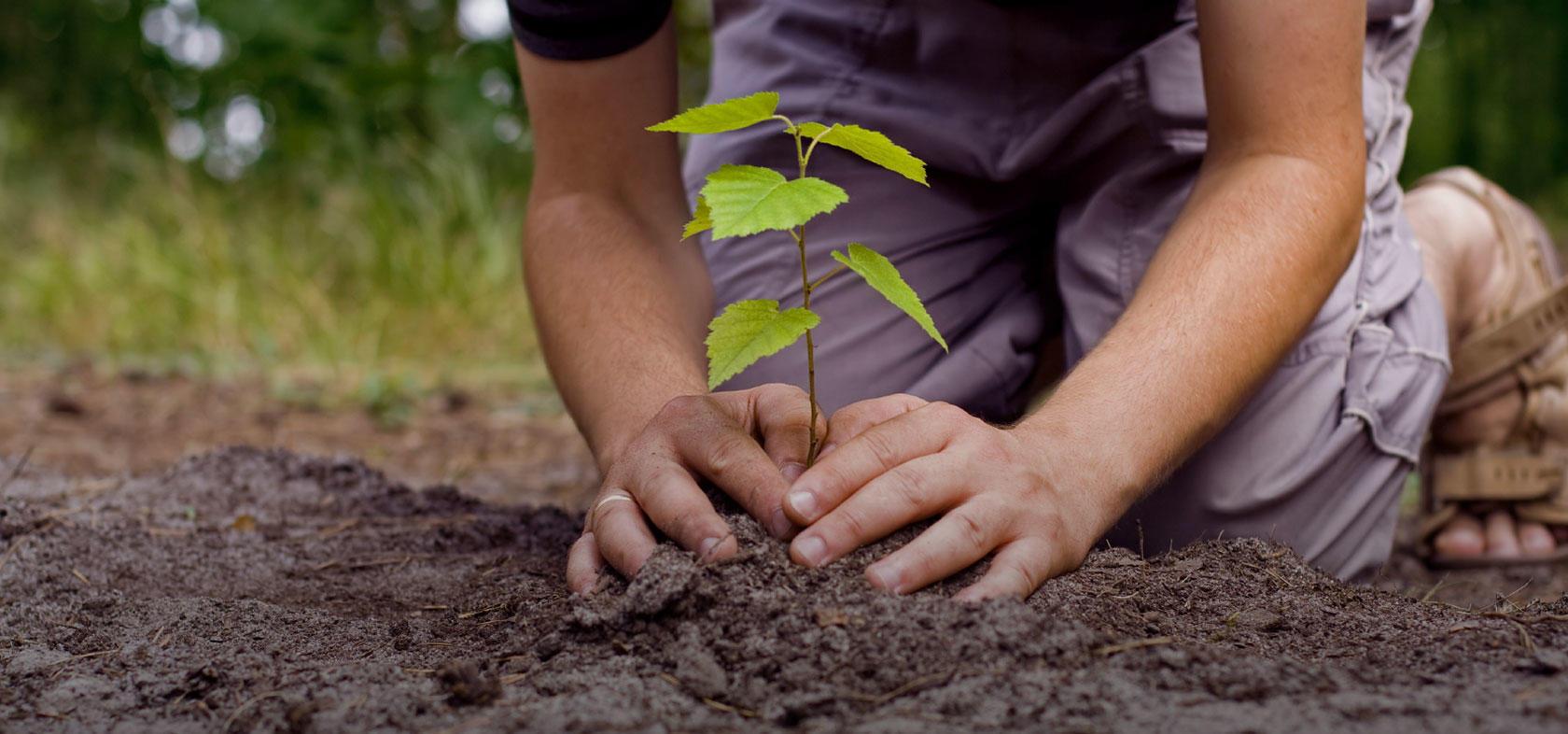 Во сне сажать маленькое дерево 5