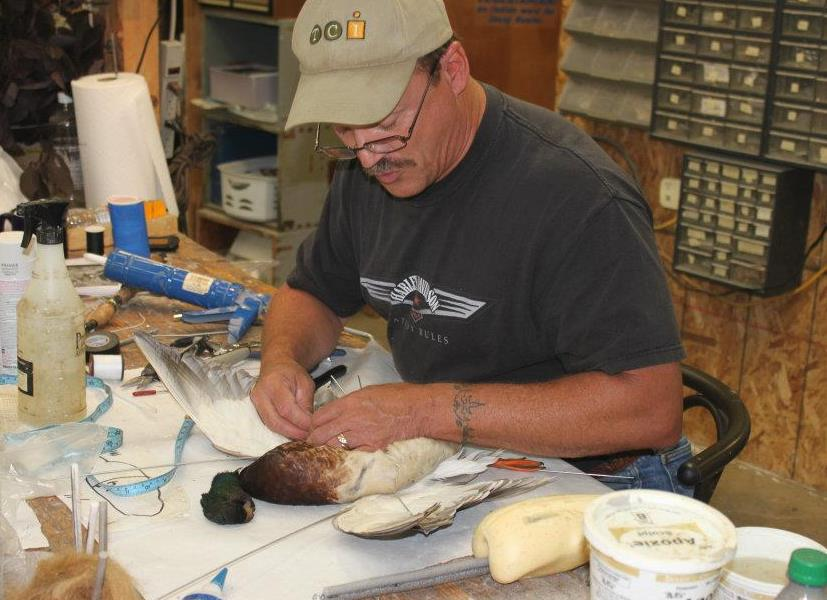 Dave's School Of Taxidermy image 0