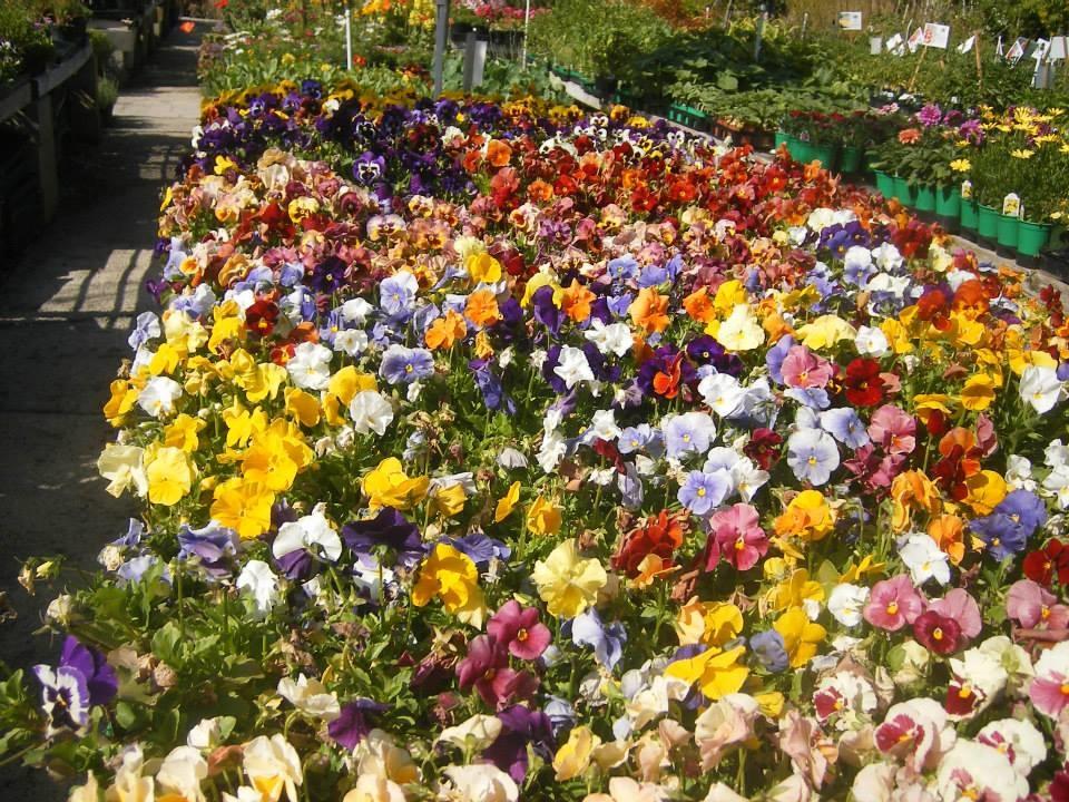 Colorful Garden Center image 0
