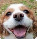 Oakview Veterinary image 1
