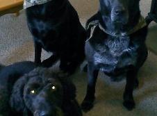 Limerick Veterinary Clinic image 6