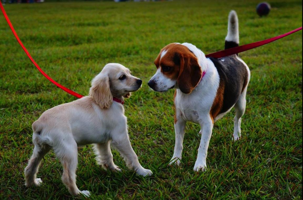 VIP Pet Service image 8