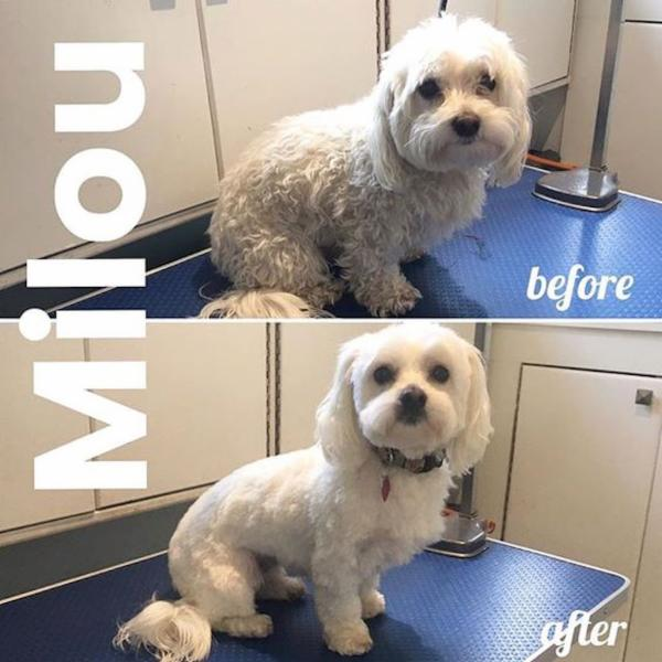 Dog Grooming Saanich Bc