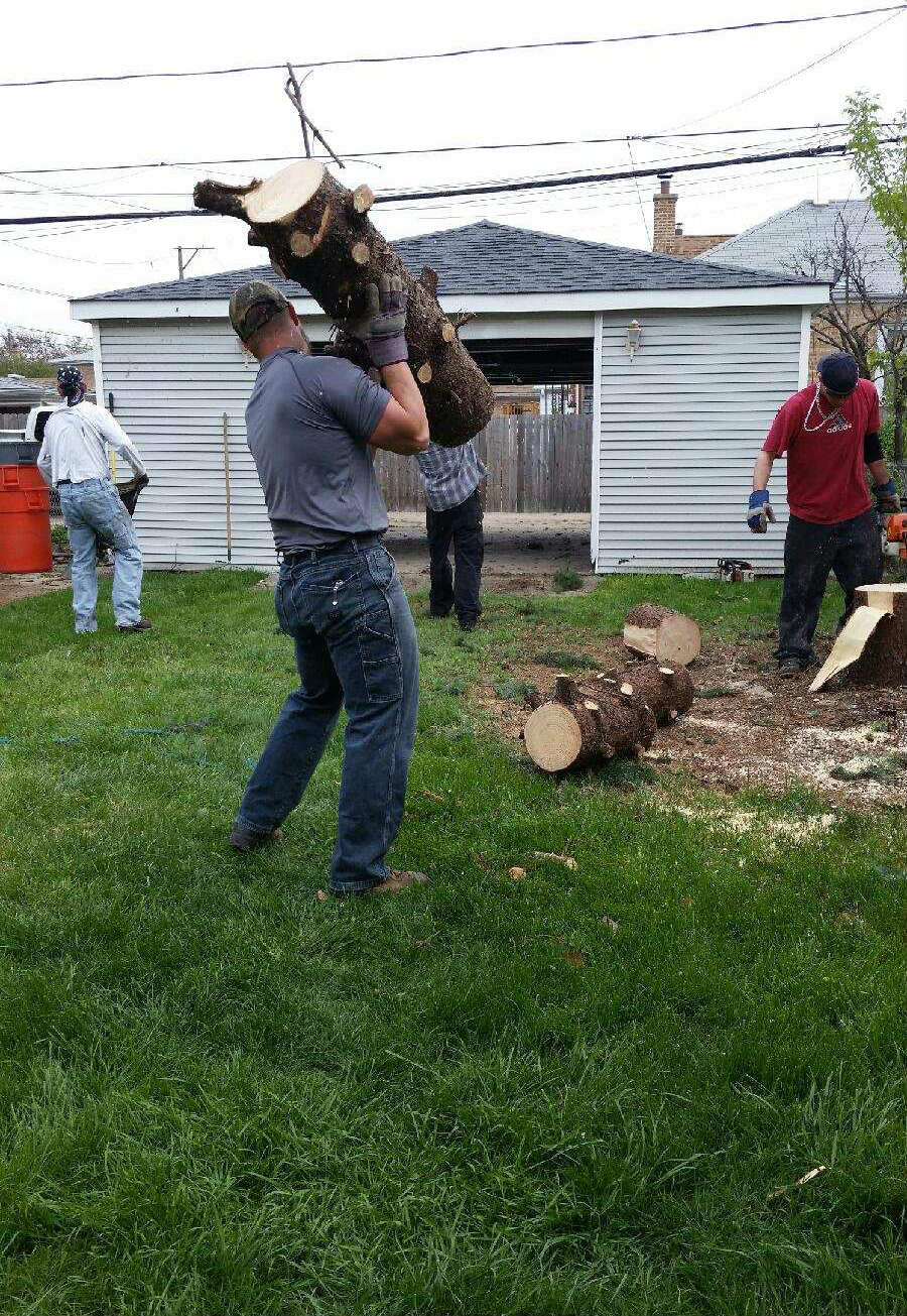 AJAX Tree Service image 5