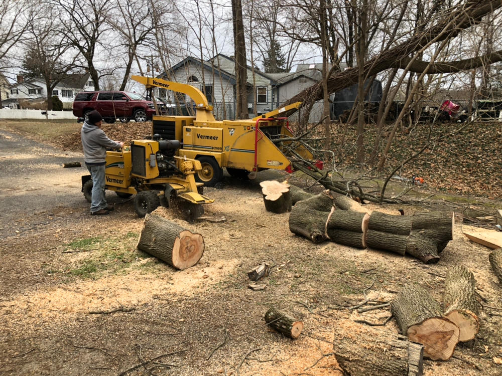 Prate's Tree Services image 6