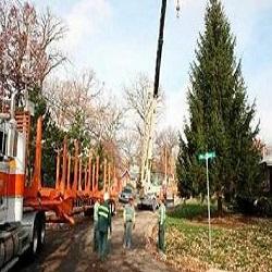 Homer Tree Service Inc image 2