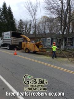 Greenleaf's Tree Service image 18