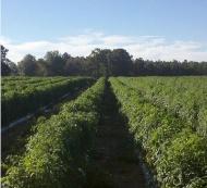 Jackson Farms image 0