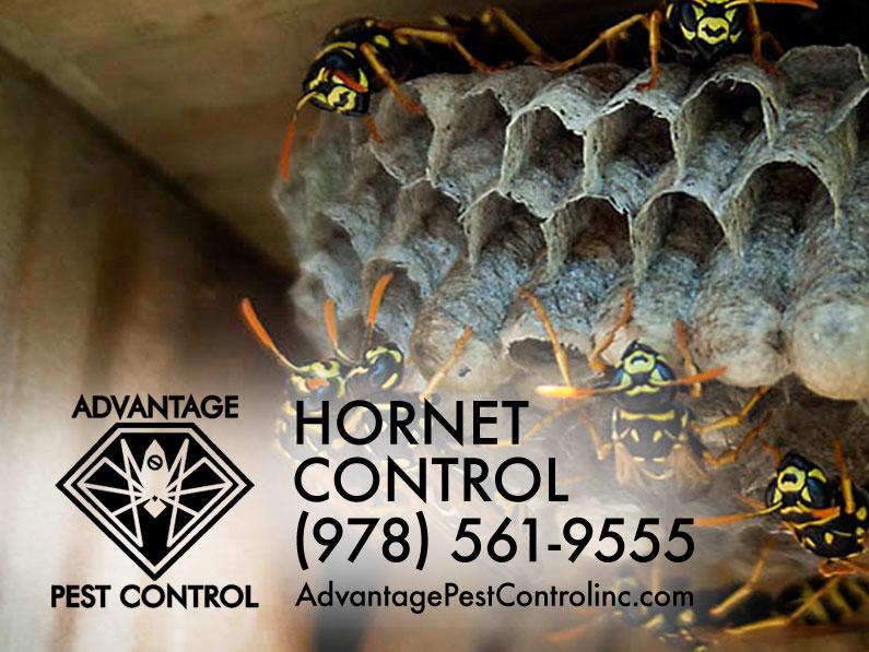 Advantage Pest Control, Inc image 8
