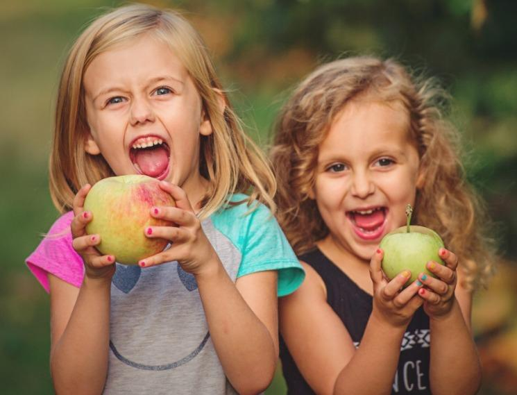 Linvilla Orchards image 3