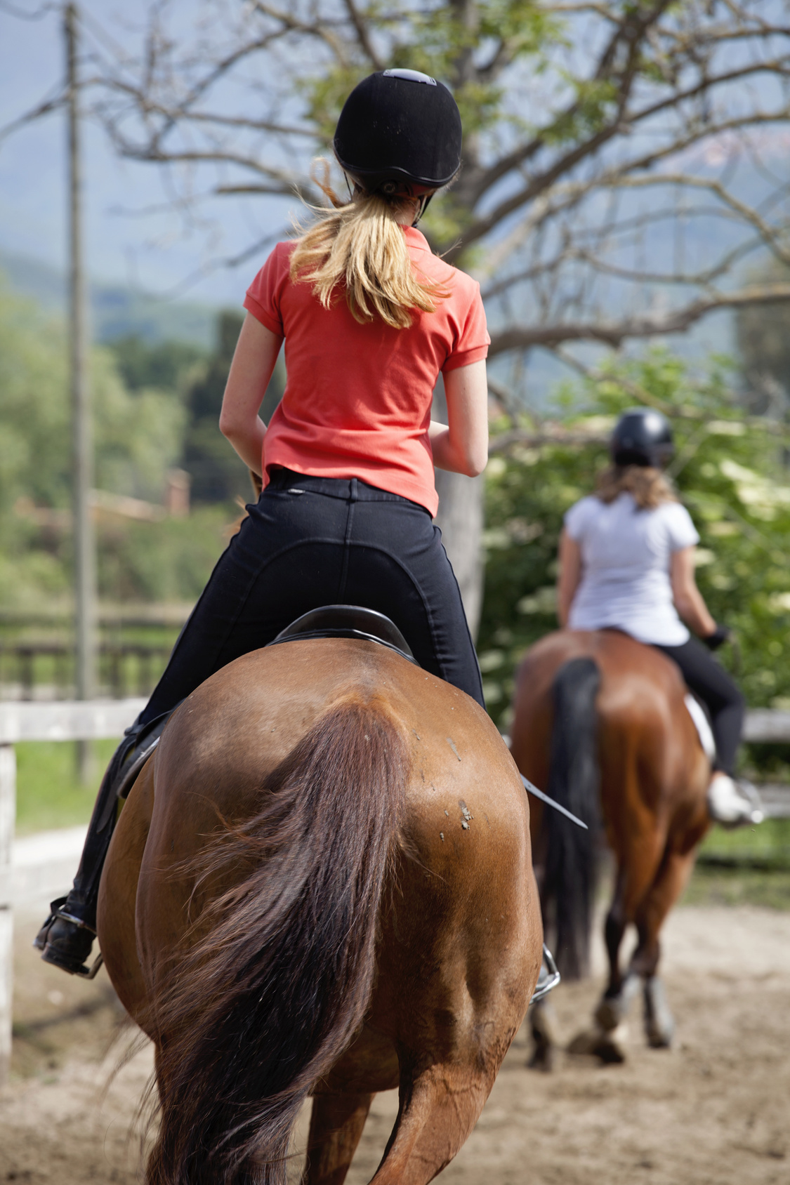 Shannon Hill Riding Academy image 7