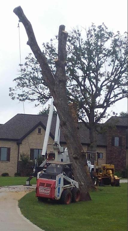 Hughes Tree Service image 5