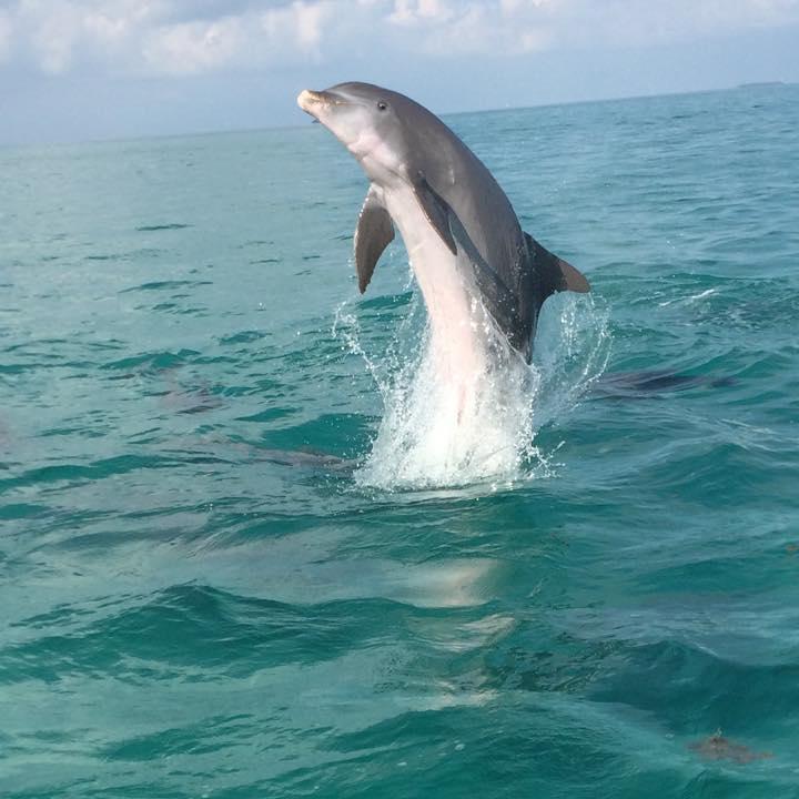 Dolphin Safari Charters Inc image 3