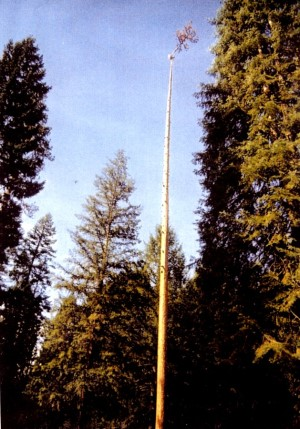 Able Tree Services image 2