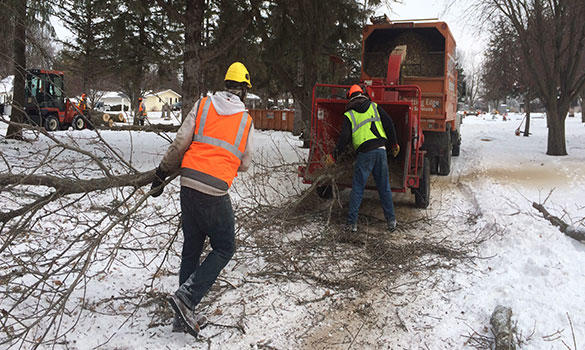 Cutting Edge Tree Services image 9