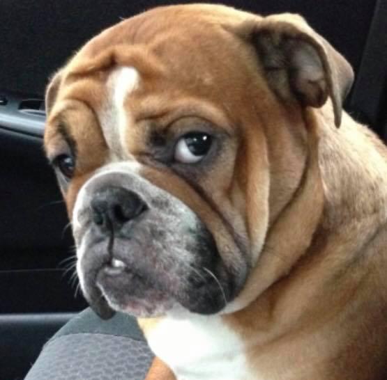 The Good Dog Shoppe image 5