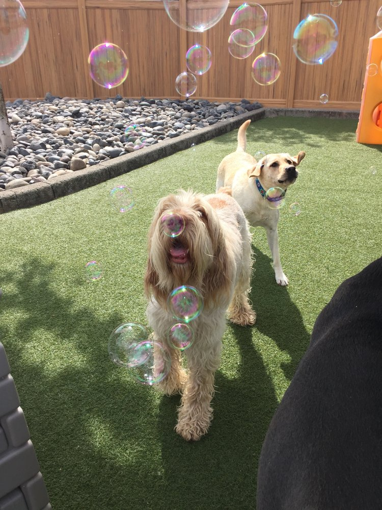 A Dog's Best Friend Doggy Daycare- East image 1