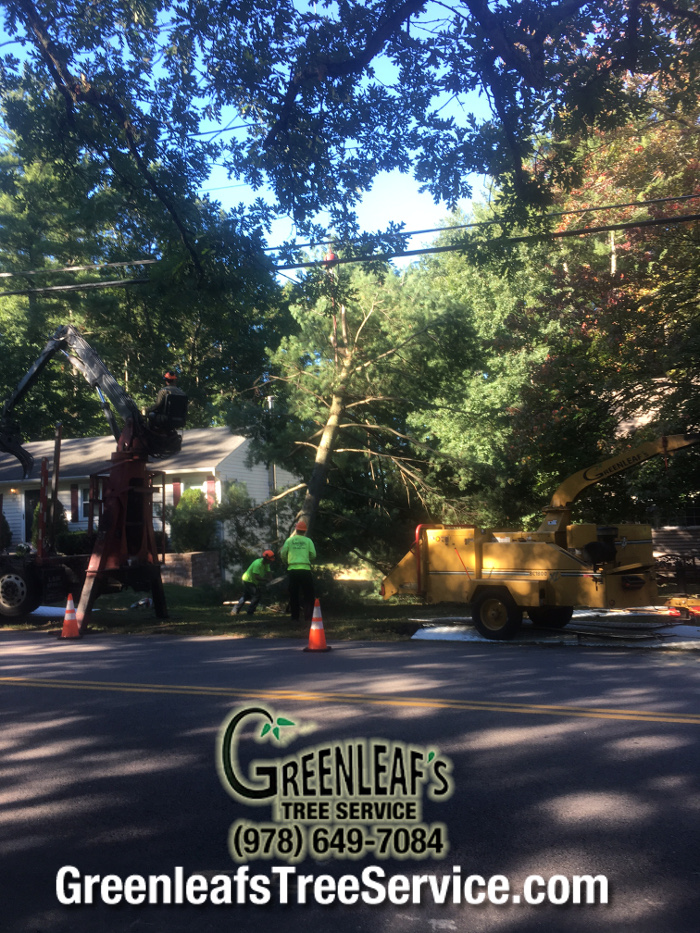 Greenleaf's Tree Service image 37