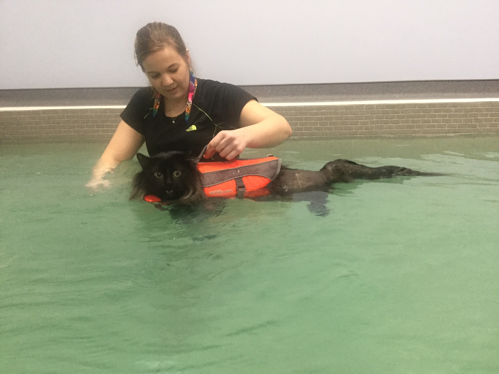 O'Sullivan Animal Hospital in Barrie: New Indoor Hydrotherapy Pool