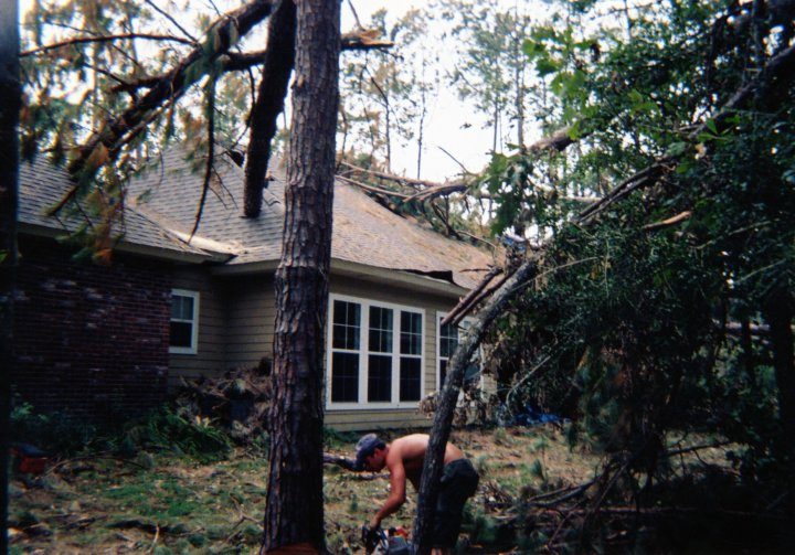 spears tree service image 11