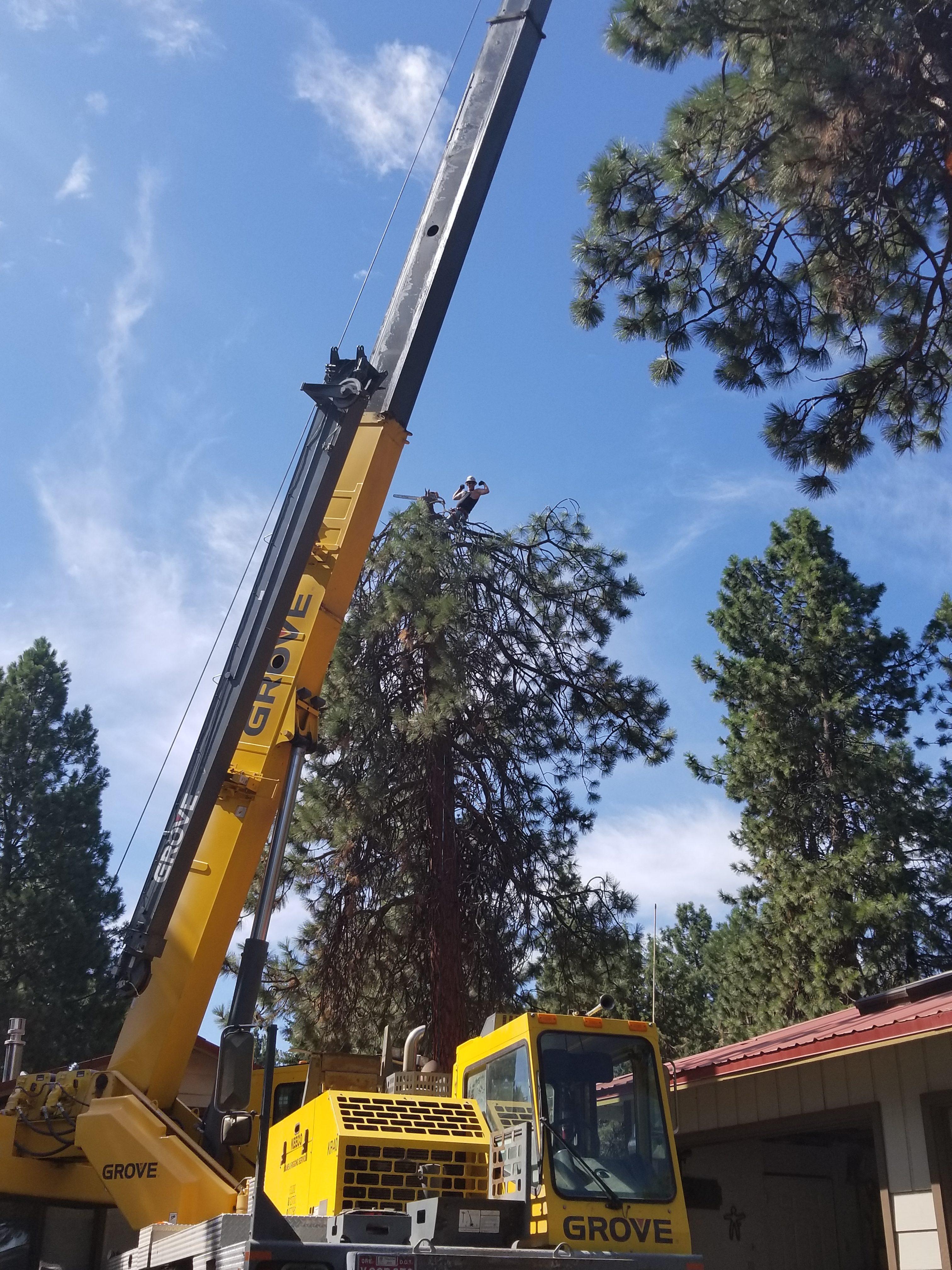 Central Oregon Tree Experts image 0