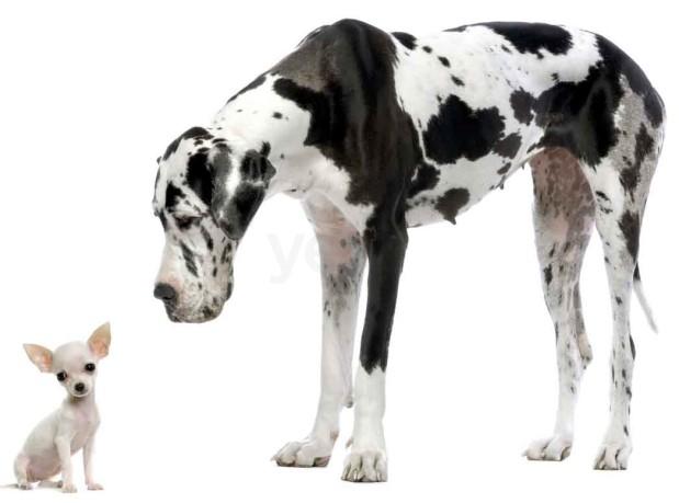 Mast Blvd Pet Care image 3