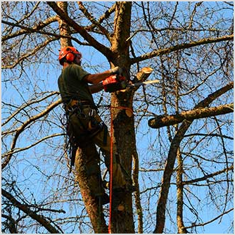 Tree Trimming. You can rest easy because Independent Tree Service has an Arborist on staff who has over 35 years of experience in tree trimming.